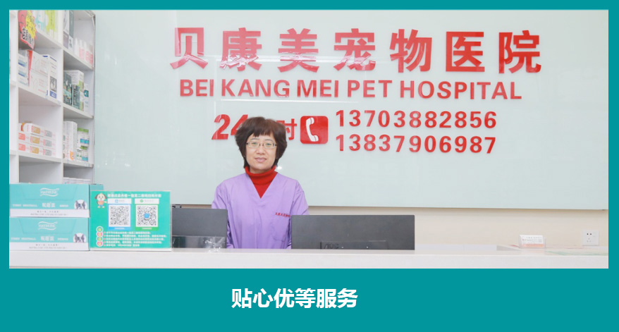 洛阳宠物医院_洛阳动物医院-洛阳市西工区ballbet体彩官网动物医院
