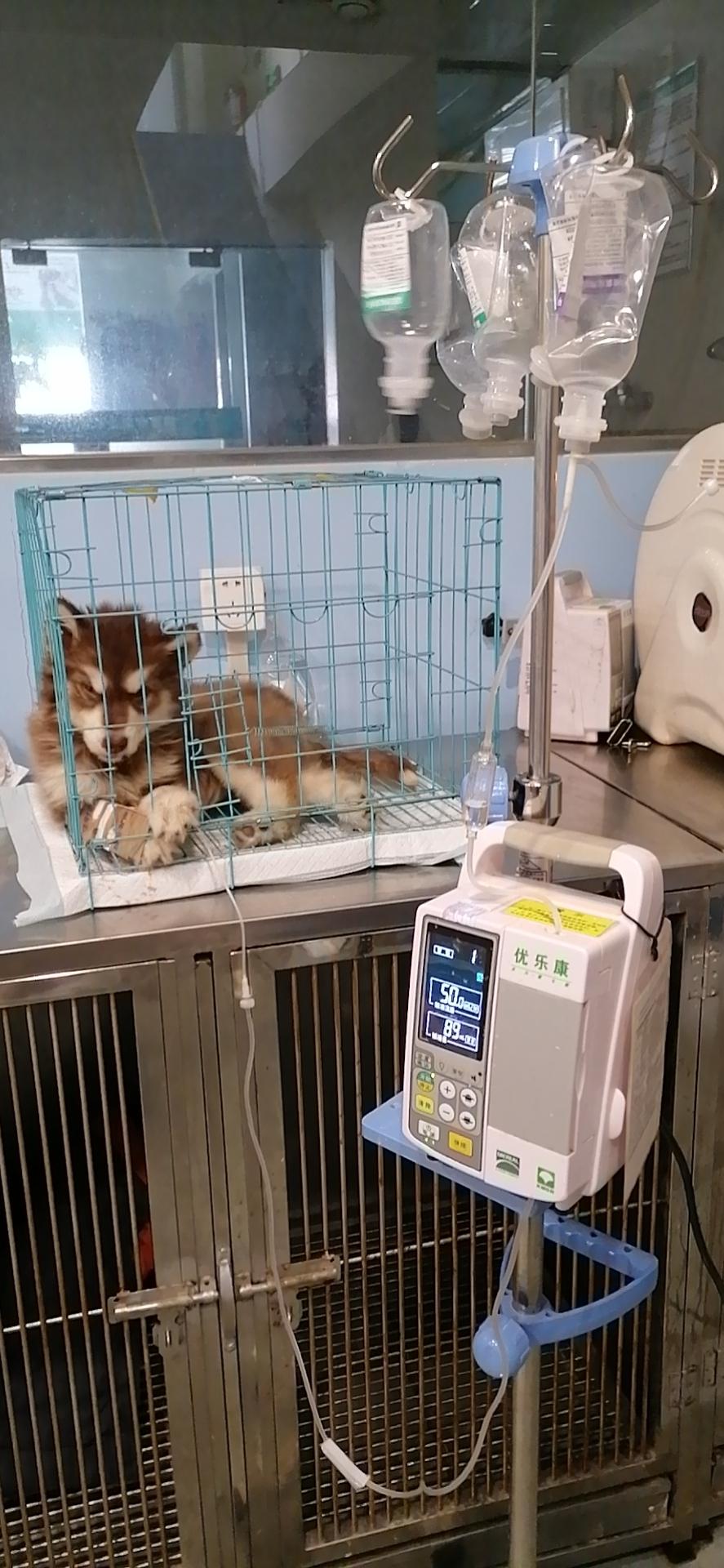 洛阳宠物医院的狗狗老咳嗽什么原因