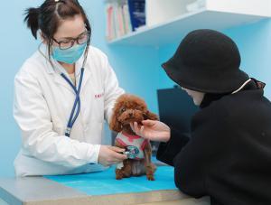洛阳宠物医院9