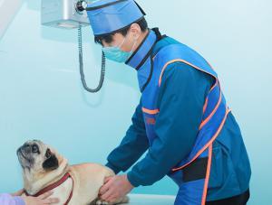 洛阳宠物医院8