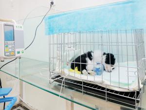 洛阳宠物医院6