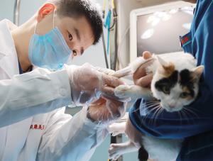洛阳宠物医院4